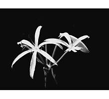 Swamp Lily Photographic Print