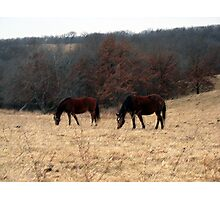 Grazing Horses Photographic Print