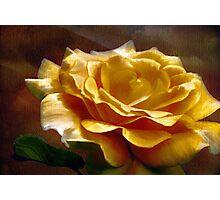 King Midas' Rose  Photographic Print