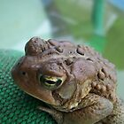 Toad. by Kiley Boehlke