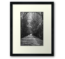 Palmetto Trail In Florence, SC Framed Print