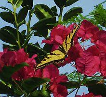 Tiger Swallowtail in Bougainvillea by jsmusic