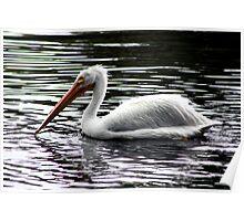Pelican Swimming Poster