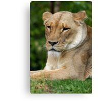 Content (or sizing you up for dinner) Canvas Print