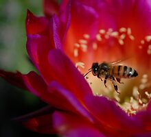 To Be a Bee by Karen Zimmerman