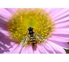 Gossamer wings Photographic Print