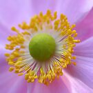 Be my Anenome by mooksool