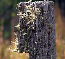 Abandoned Fencepost by Trevor Farrell