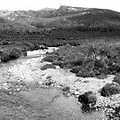 Wild River by Catherine Davis