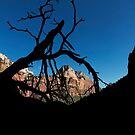 Kayenta Trail - Zion National Park by Alex Preiss