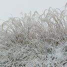 Snow I by Christine Jones