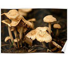 Colins Fungi Poster