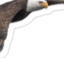 Isolated Eagle-3 Sticker