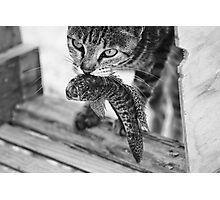 Time to Hunt Photographic Print