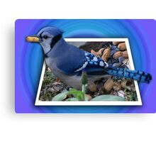 ¨¯`•.★BLUE JAY ENJOYING HIS SNACK OF PEANUTS¨¯`•.★ Canvas Print