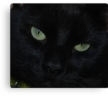 Mr Sir: Face-to-CatFace Canvas Print