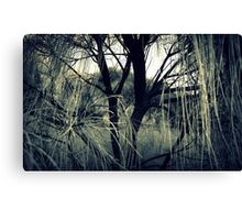 View of Gondwana Canvas Print
