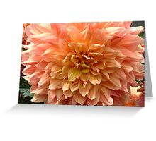 Dahlia Mostly Peach with Yellow Greeting Card