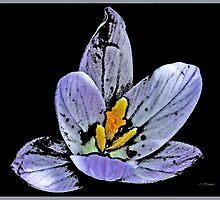Bloom in Blue by ©FoxfireGallery / FloorOne Photography