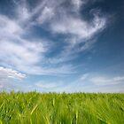 june wheat field by imaginaryfriend
