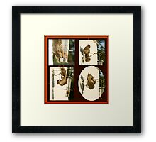 Secret Squirrel Thief Framed Print