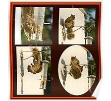 Secret Squirrel Thief Poster
