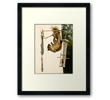 Secret Squirrel Thief 2 Framed Print
