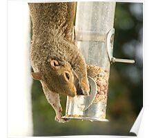 Secret Squirrel Thief 1 Poster