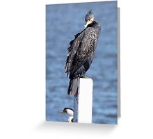 Great Cormorant ~ Armour-plate Feathers Greeting Card