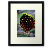 Punk Rock Prickly Pear Framed Print