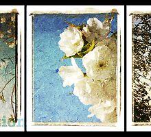 Fascination by Melanie  Dooley