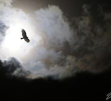 Flying By the Moon Light by DavidWayne
