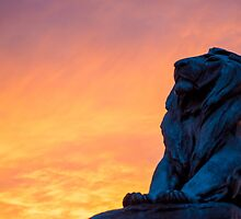 Capital Lion by Jay-J