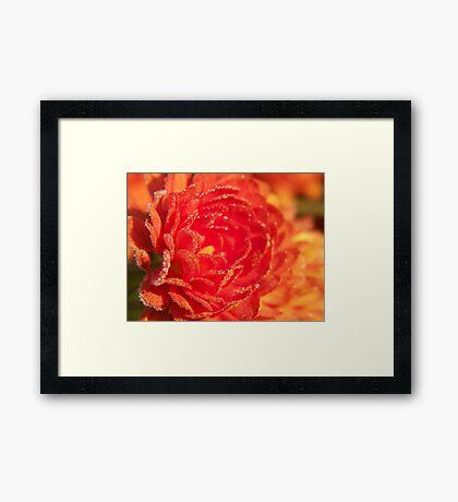 Frosted Flower Framed Print
