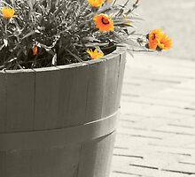 Pot of Sunshine by OzShell