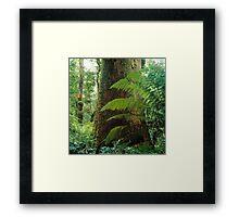 Mountain Ash, Victoria. Framed Print