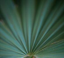 Dwarf Palmetto Sabal – Congaree National Park, South Carolina by Jason Heritage