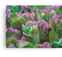 For The Love Of Lettuce Canvas Print