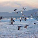Seagulls in Flight by Gloria Abbey