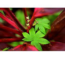 Wild Flora Photographic Print
