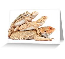 Whose your Daddy Greeting Card
