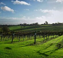 English Vineyard by nicholaspr