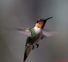 Humming Bird in Flight by Michael Jeffries