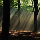 A veil of morning light by jchanders