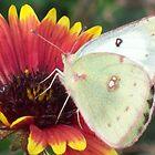 FLOWER WORLD by Michelle BarlondSmith