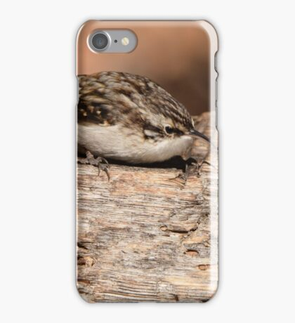 Creeper of Frijoles Canyon iPhone Case/Skin