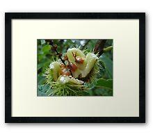 Sweet chestnuts Framed Print