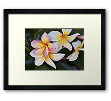 Soft Swirls Framed Print
