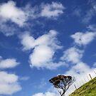 Long way to the top by David Haviland
