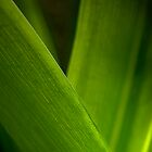 Green macro shot of leaves by gamaree L